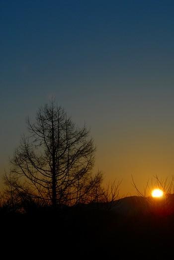 カラマツと太陽