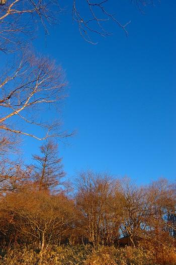 白樺と唐松と青空