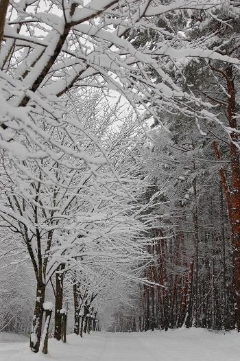 どこまでも続く雪景色