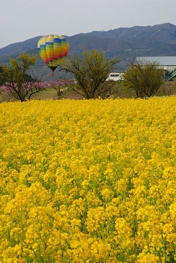 菜の花と気球