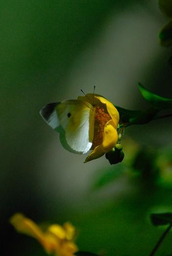 花と蝶・・・
