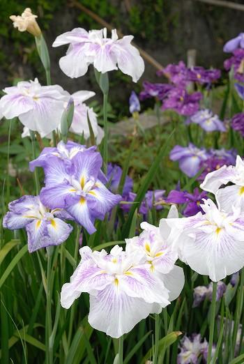キレイな花でした・・・