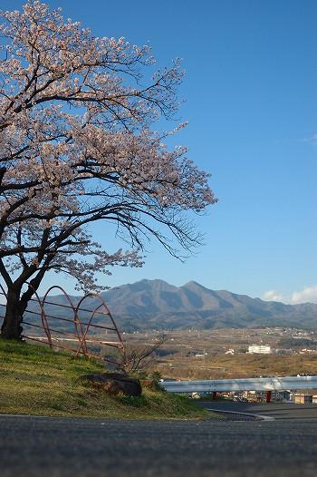 カヤガタケと桜