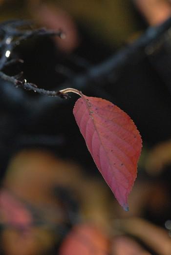 秋から冬へ・・